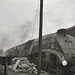 LNER/BR Class A4 4-6-2 No. 60010 at Gateshead Shed 1963 - ID 2551